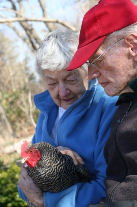 Cynthia and Howie with one of the Plymouth Rock hens.  Photo by Lynn Christoffers