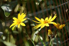 Blossoms brighten the September garden
