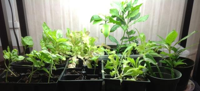 An indoor garden staves off cabin fever